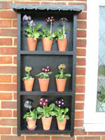 Displaying Auriculas on a smaller scale